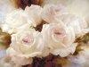 Живопись цветов 10