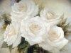 Цветы двадцать один