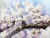 Рисунки акварелью Shin Jong Siк 3
