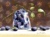 Рисунки акварелью Shin Jong Siк 7